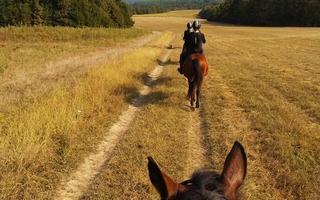 Chute de cheval : la responsabilité de l'éleveur écartée