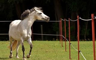 Le consentement de l'acheteuse du cheval de sport n'a pas été vicié