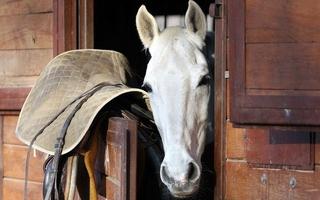 Défaut de soins et d'entretien de chevaux: l'éleveur lourdement condamné