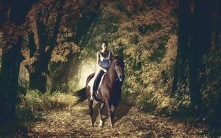 Chute de cheval : la cavalière indemnisée